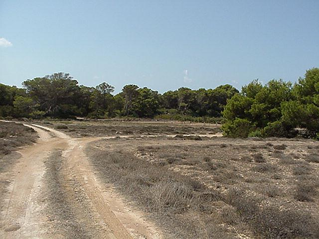 Dirt road - Formentera, September 2000